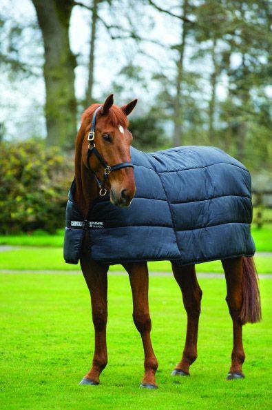 sous couverture cheval